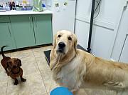 Ветеринарная клиника беспроигрышная инвестиция Киев