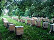 Продам пасеку, ( пасека, пасіка, пчелы, бджоли ) высокодоходный бизнес Хмельницкий