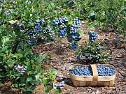 Развитие созданного сельхоз хозяйства доставка из г.Винница