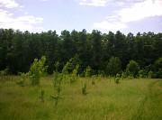 Продам участок 24 сотки в лесу Киев